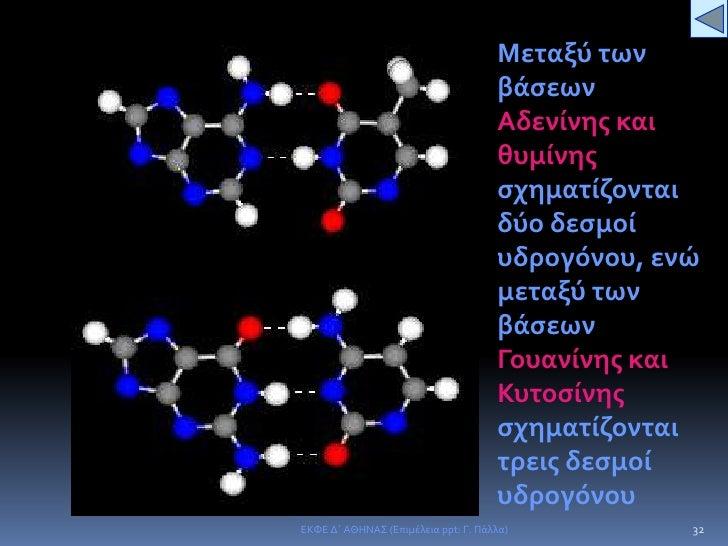 Οι δυο αλυσίδες είναι αντιπαράλληλες.</li></ul>29<br />