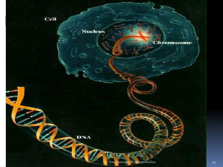 42<br />Τα πλασμίδια<br />1. Βρίσκονται ένα ή περισσότερα ανά κύτταρο<br />Αντιγράφονται ανεξάρτητα από το κύριο μόριο DNA...