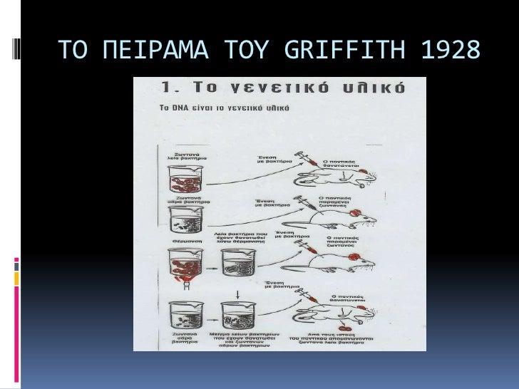ΤΟ ΠΕΙΡΑΜΑ ΤΟΥ GRIFFITH 1928<br />