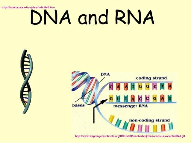 DNA and RNAhttp://faculty.uca.edu/~johnc/mbi1440.htm                                            http://www.wappingersschoo...