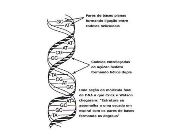 ••   Molécula de RNA