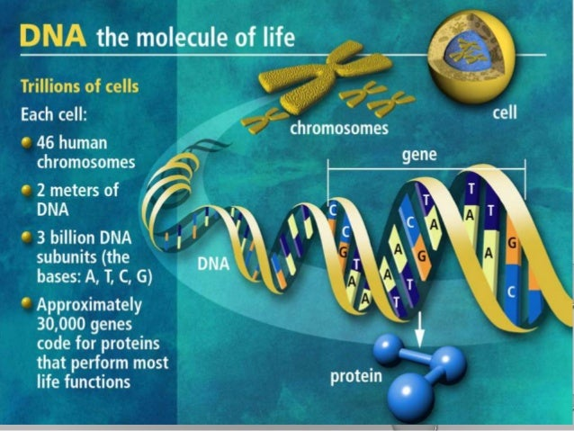 Dna the code of life . a shot lesson for grade 12 learners