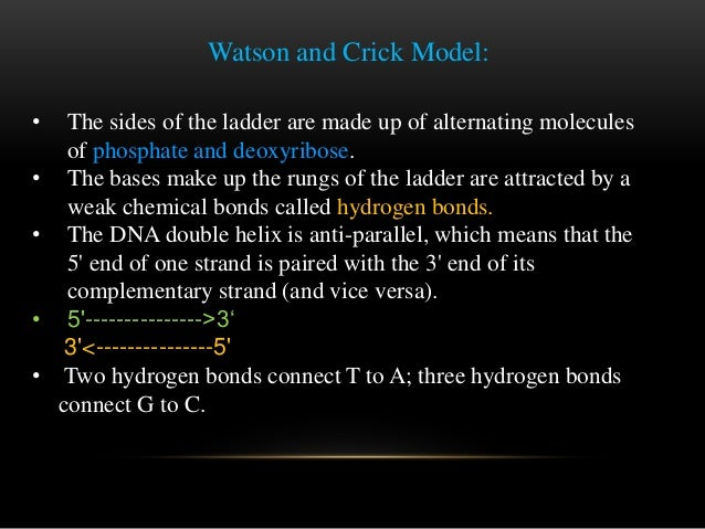 watson and crick dna research paper