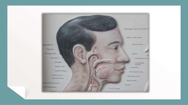 Surgical Anatomy of Nasopharynx- Debashis Nanda Slide 2