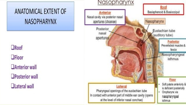how to clean the nasopharynx