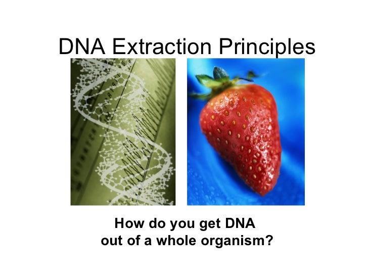 How to Analyze DNA Microarray Data