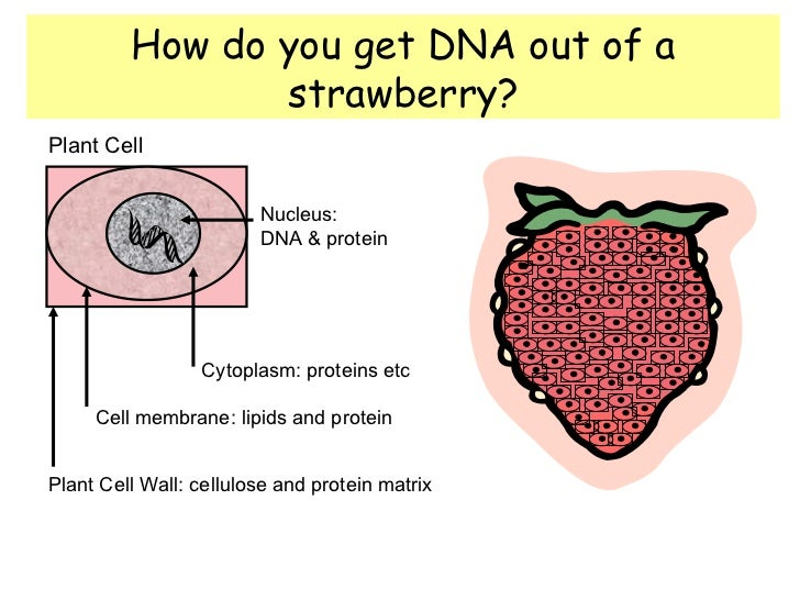 Dna Extraction Principles