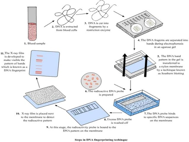 An analysis of dna use for forensic science