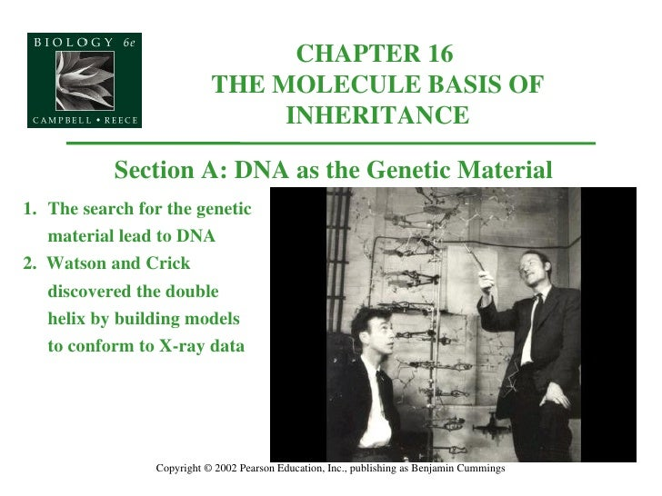 Dna History And Replication Review