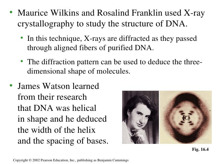maurice wilkins and rosalind franklin relationship problems