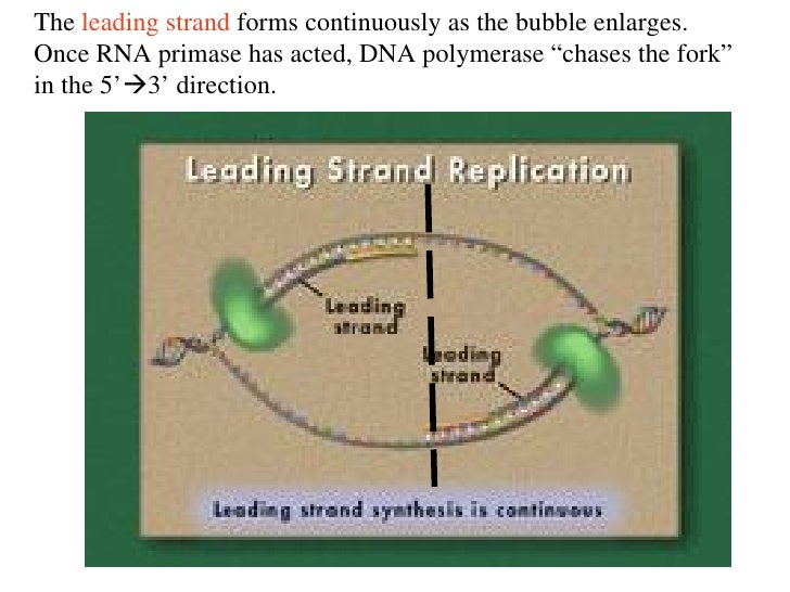 Dna history and replication review 65 the leading strand forms pronofoot35fo Choice Image