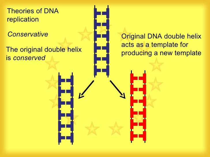 42 dna replication replication 2 theories of dna replication conservative original dna double helix acts as a template pronofoot35fo Images