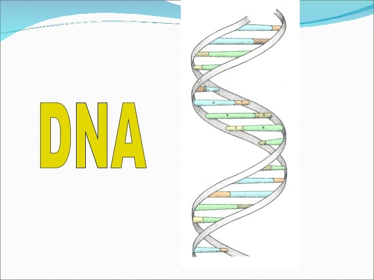 DNA  DNA stands for deoxyribose nucleic acid  This chemical substance is present in the nucleus  of all cells in all livin...