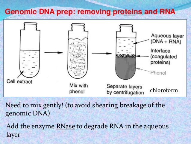 biology lab: extraction of crude dna from plant and animal tissues essay Plant tissues laboratory practices and plant dna extraction at home.