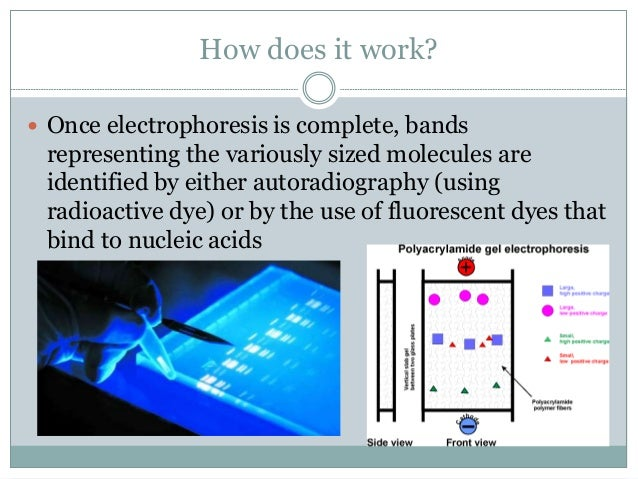 dna and gel electrophoresis