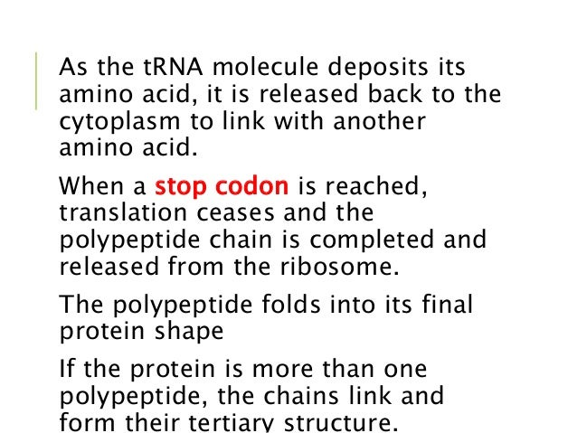 Dna and protein synthesis