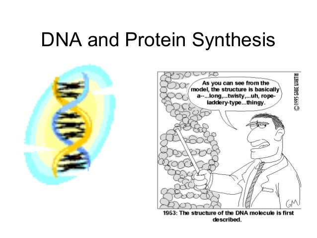 synthesise dna The ordered assembly of deoxyribonucleotides into dna and of ribonucleotides into rna involves somewhat simpler cellular mechanisms than the correct assembly of the.