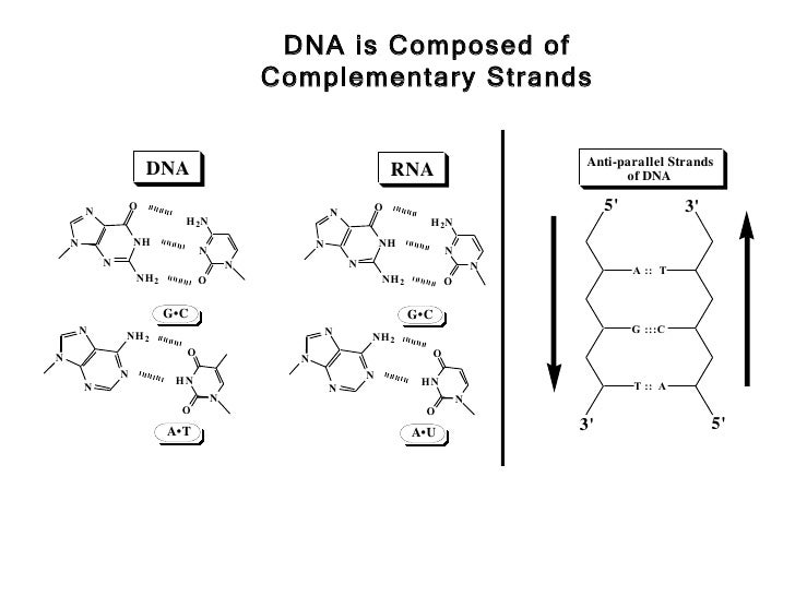 Dna and rna 19 ccuart Image collections