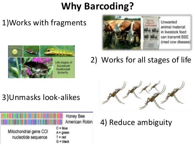 dna bar coding Dna barcoding is a novel system designed to provide rapid, accurate, and  automatable species identifications by using short, standardized gene regions as .