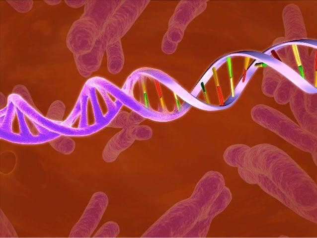 DNAbasepairs