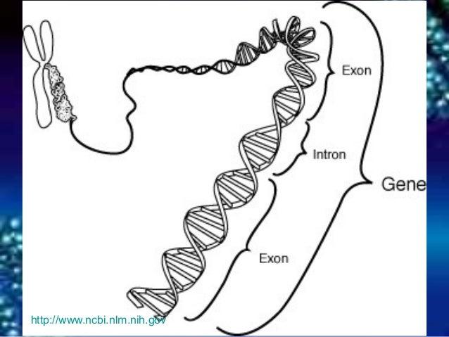 Dna chromosomes genes 7 httpncbimh ccuart Image collections