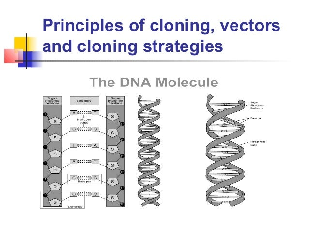 Principles of cloning, vectorsand cloning strategies