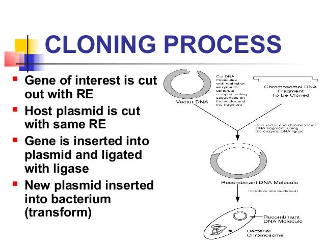 Dna cloning research paper