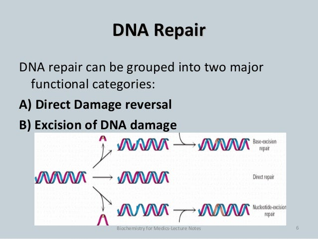 dna repair paper The relationship between dna repair variants and gc whereas some studies report a link with gc risk [18, 19] or anatomopathological subtypes [20, 21], other studies.
