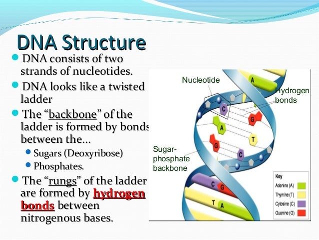 discovery of the structure of dna essay In broca's brain, a collection of essays  to the discovery of the double helix structure of dna are now well-known, and they were all pretty big dicks to her .