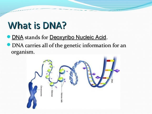 1 describe the structure of dna The structure of dna therefore, was elucidated in a  bonds with one another,  stabilizing the double-stranded structure.