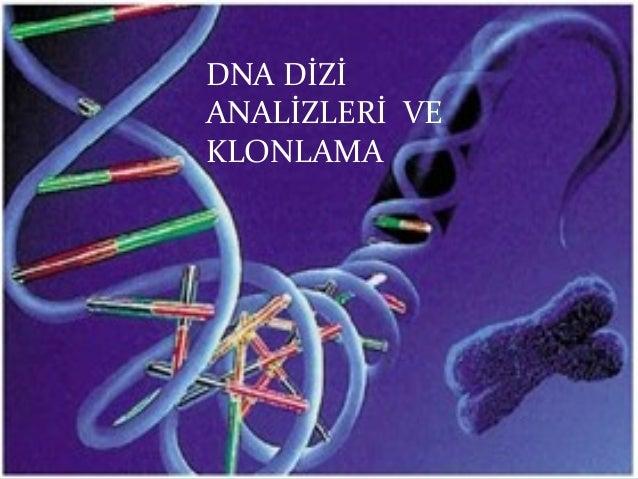 DNA DİZİANALİZLERİ VEKLONLAMA