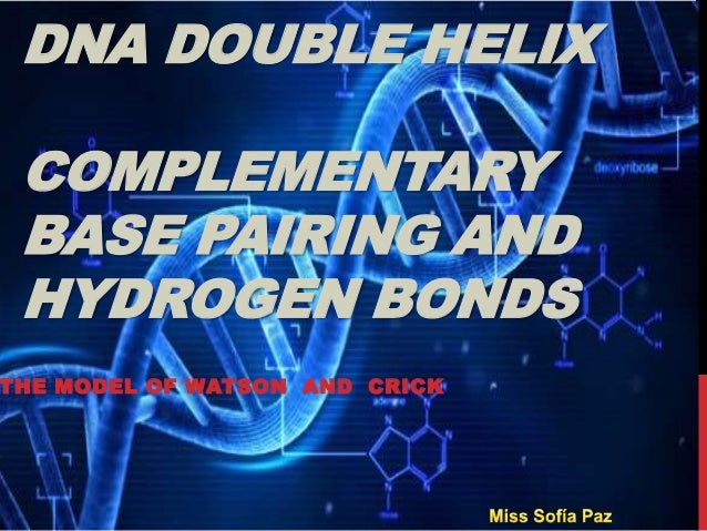 DNA DOUBLE HELIX COMPLEMENTARY BASE PAIRING AND HYDROGEN BONDS THE MODEL OF WATSON AND CRICK