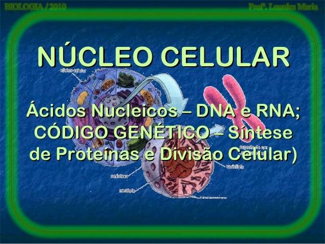 NÚCLEO CELULAR Ácidos Nucleicos – DNA e RNA; CÓDIGO GENÉTICO – Síntese de Proteínas e Divisão Celular)