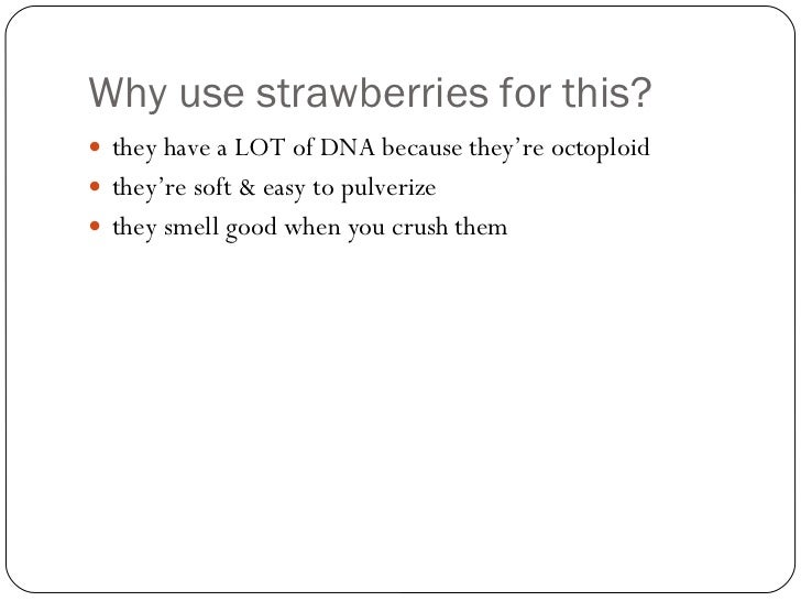 Dna extraction of strawberry | English essay font