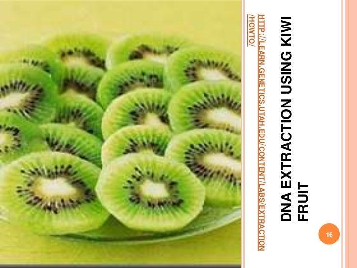 dna extraction kiwi fruit