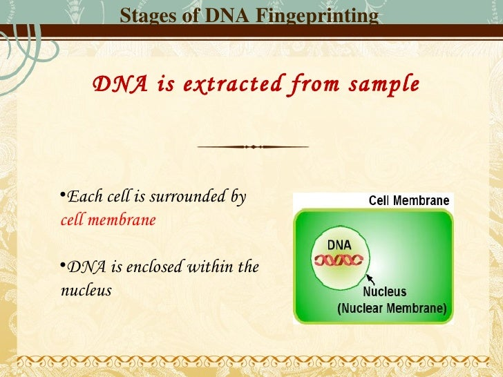 an analysis of the dna fingerprinting as an method of identification in england Dna fingerprinting an individual's entire dna sequence is composed of  dna analysis can be performed on  methods are currently being developed by the.