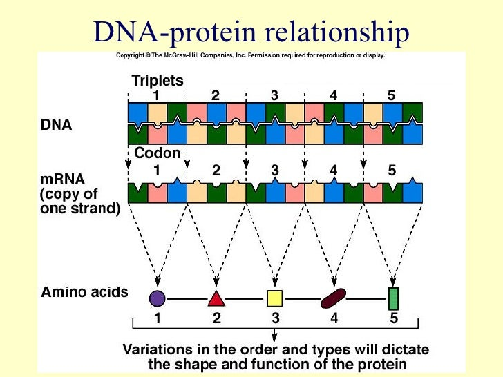 genes and proteins relationship memes