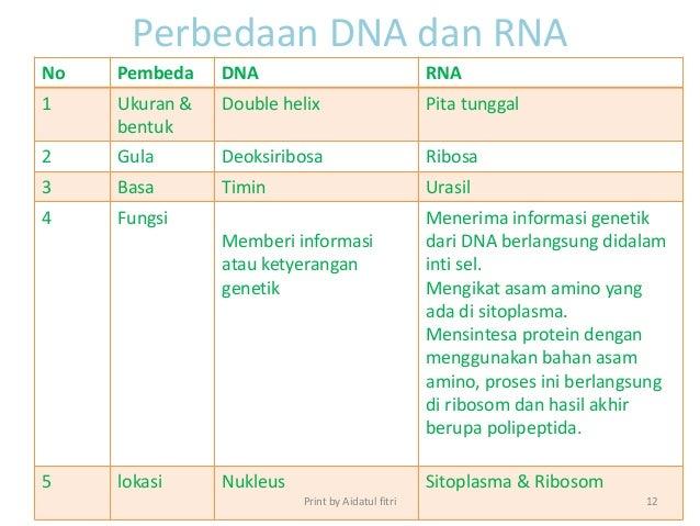 diagram perbedaan dna dan rna image collections