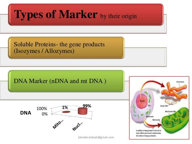 types of molecular markers pdf