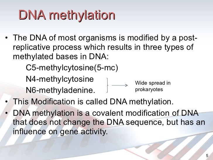 how does dna play a role It is dna that contains the genetic code that is used to make proteins in turn, it is  the structure of proteins that determines many of the biological functions and.
