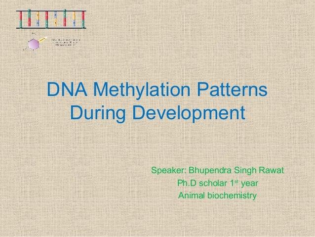 DNA Methylation Patterns During Development Speaker: Bhupendra Singh Rawat Ph.D scholar 1st year Animal biochemistry