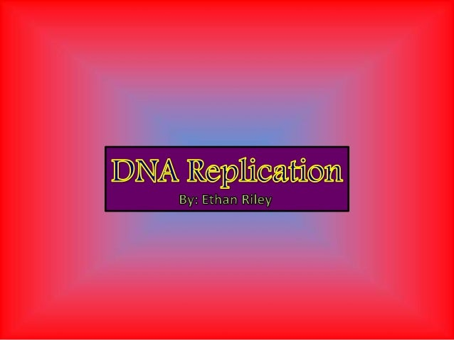 5'  3'  First, DNA helicase unzips the DNA strand and breaks the weak hydrogen bonds holding the complementary bases toget...