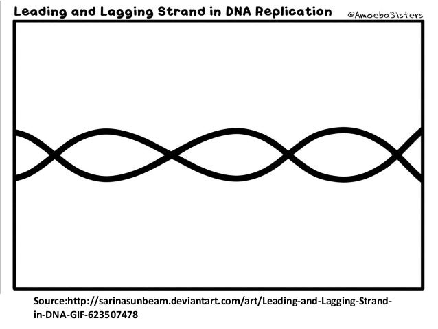 DNA replication_DNA polymerase III (structure and fuction)