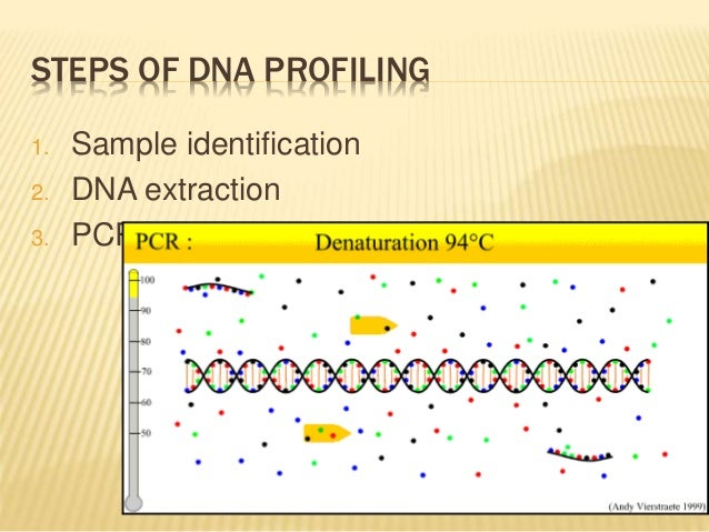 """an introduction to the analysis of dna profiling Use restriction enzyme analysis and """"dna electrophoresis fingerpnnting"""" to  identify and  pre-lab focus questions: introduction to dna fingerprinting."""