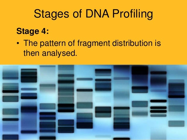 dna profiling Dna profiling is a technique by which individuals are identified on the basis of their respective dna profiles every somatic cell in our bodies contains our dna this dna can be extracted from our cells, and then fragments of it can be photographed using a process called gel electrophoresis.