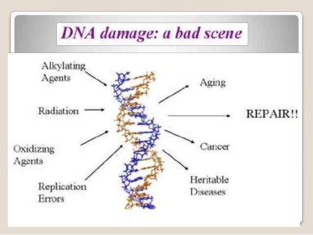 BRCA1 and BRCA2 gene testing
