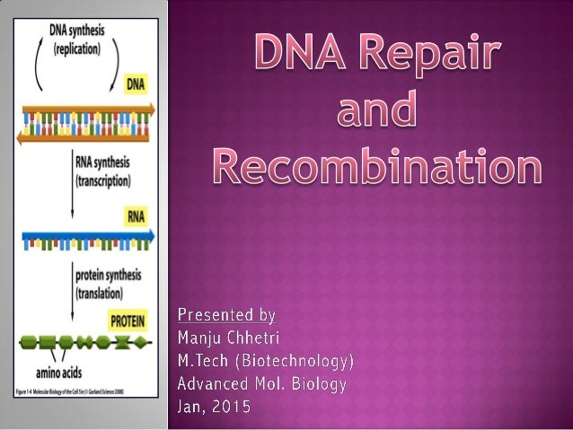  DNA repair is a collection of processes by which a cell identifies and corrects damage to the DNA molecules that encode ...