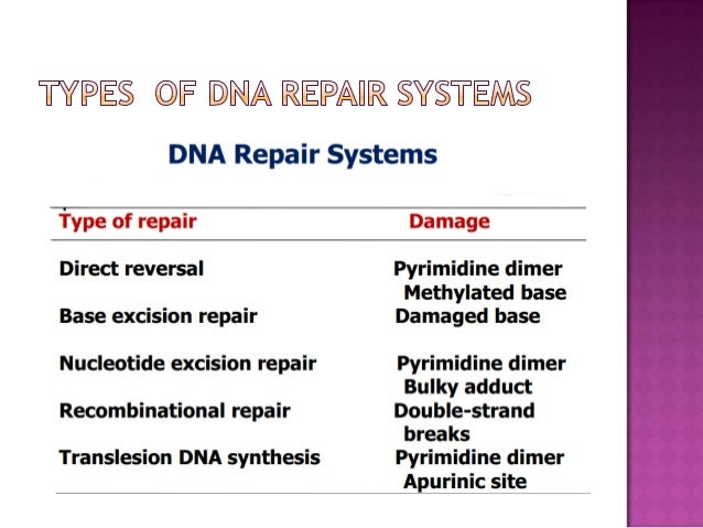 Dna Damage  Repair And Recombination