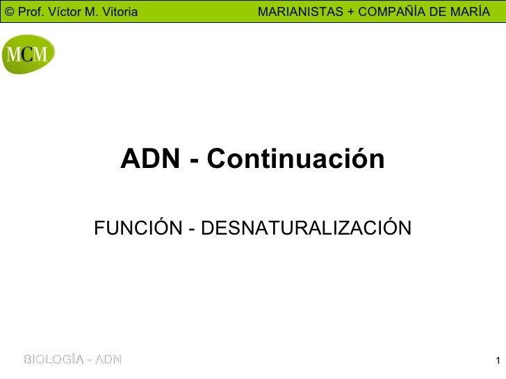 ADN - Continuación FUNCIÓN - DESNATURALIZACIÓN