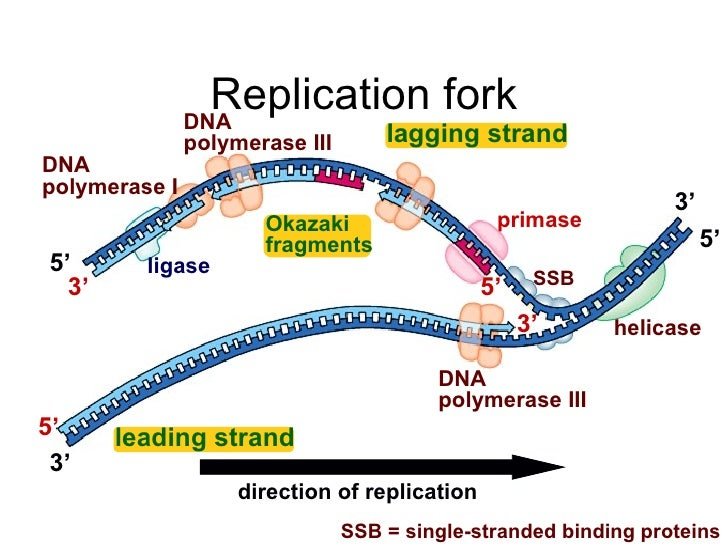 Dna replication replication ccuart Images